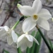 Dans mon jardin l'hiver …