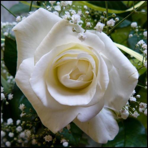 bouquet_6_07_08.jpg