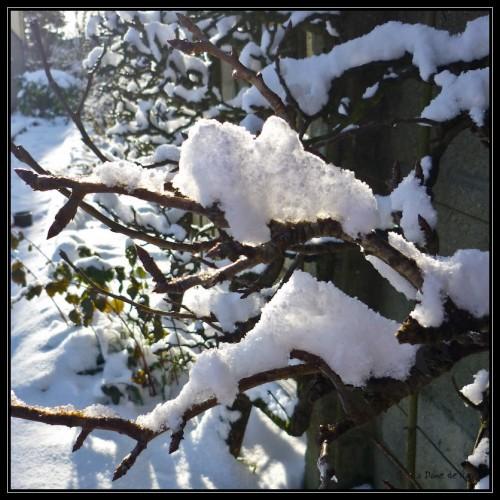 neige_9_01_2010.jpg