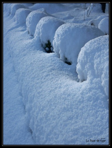 neige_buis_9_01_2010.jpg