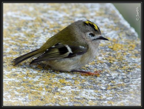 oiseau1_21_10_2015.jpg