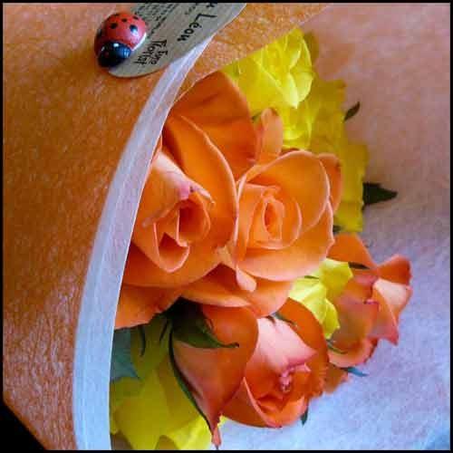 roses_coccinnelles_3_07_08.jpg