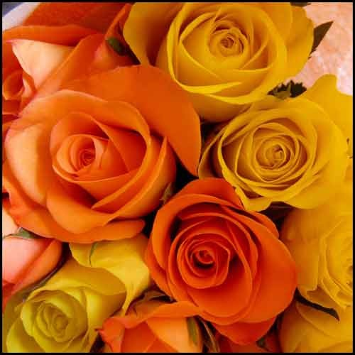 roses_3_07_08.jpg